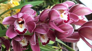 花の写真・画像素材[400390]