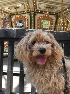 椅子に座っている犬の写真・画像素材[1275144]