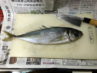 No.399600 魚