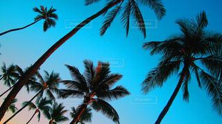 海の写真・画像素材[396625]