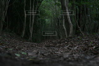 木の写真・画像素材[398781]