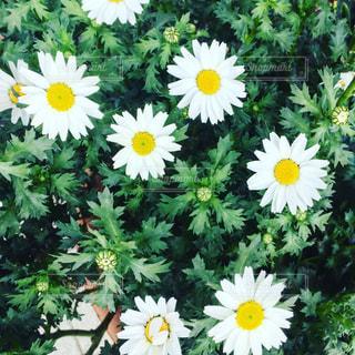 自然の写真・画像素材[403515]