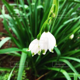 花の写真・画像素材[437875]