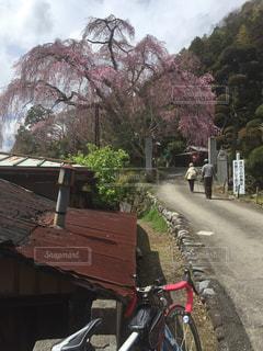 サイクリングの写真・画像素材[418471]