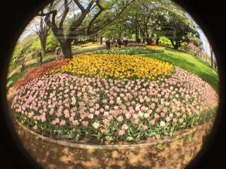 花の写真・画像素材[446777]