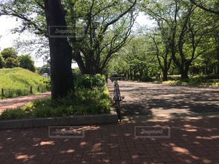 ツリーの横にある空の公園ベンチの写真・画像素材[1164716]