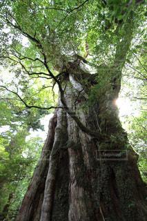 森林の写真・画像素材[397399]