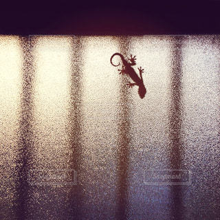 窓 - No.397445