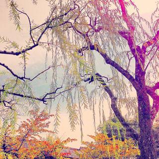 秋の写真・画像素材[556725]