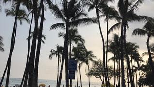 ビーチの写真・画像素材[397466]