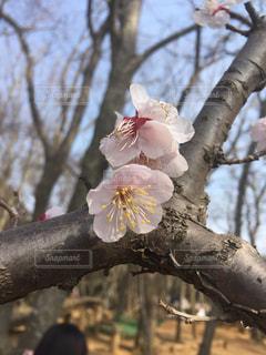 春の写真・画像素材[397695]