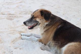 犬の写真・画像素材[397829]