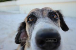 犬 - No.397830