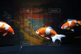 オレンジの写真・画像素材[398548]
