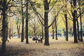公園の写真・画像素材[398823]