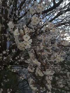 春 - No.400898