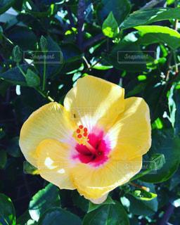 花の写真・画像素材[411518]