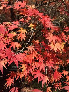 秋の写真・画像素材[398338]