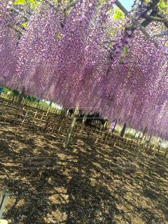 花の写真・画像素材[398356]