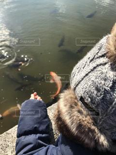 鯉に餌やりの写真・画像素材[1779456]
