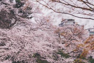春の写真・画像素材[416080]