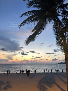 ヤシの木とビーチの人々 のグループの写真・画像素材[1132765]