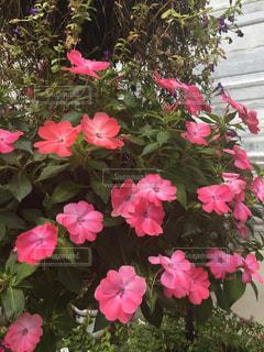 花の写真・画像素材[431421]