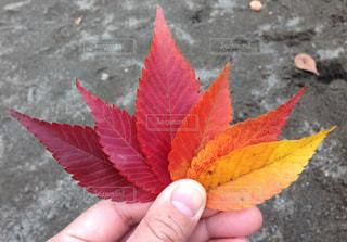 秋の写真・画像素材[399475]