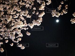 春の写真・画像素材[419508]