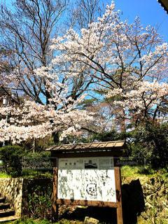 春の写真・画像素材[417690]