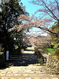 春の写真・画像素材[417691]