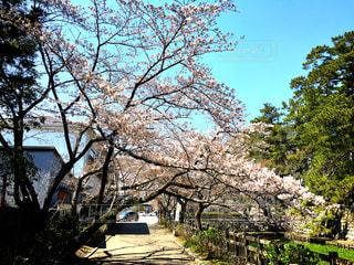 春の写真・画像素材[417692]