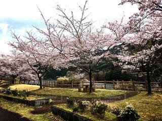 春の写真・画像素材[425125]