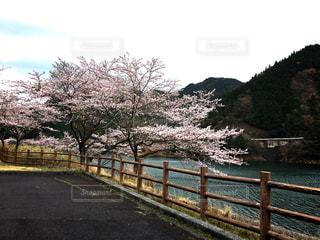 春の写真・画像素材[425126]
