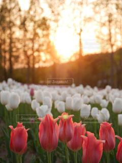 近くの花のアップの写真・画像素材[1153302]
