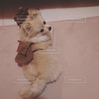 犬の写真・画像素材[406971]
