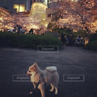 犬の写真・画像素材[420793]