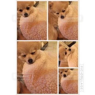 犬の写真・画像素材[437012]