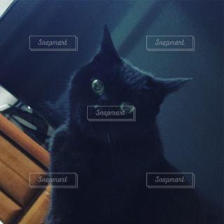 #黒#黒猫#猫#ネコ#ねこ#黄昏れの写真・画像素材[400665]