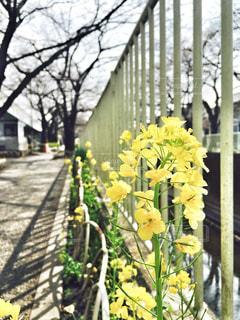 花 - No.412593