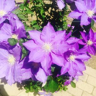 花の写真・画像素材[488412]