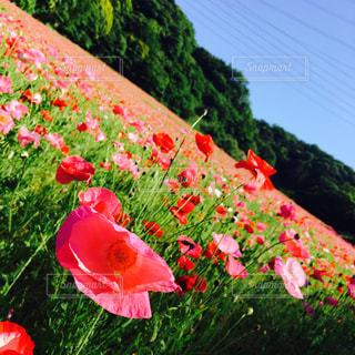 花 - No.498786