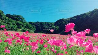 花 - No.499205