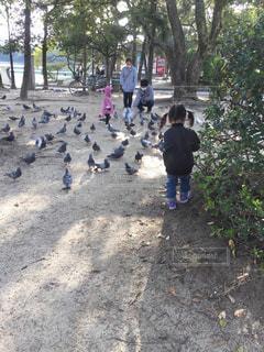 #ハト #公園 #こども #ハトの群れ #鳩の写真・画像素材[400908]