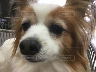 犬の写真・画像素材[401146]