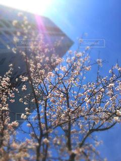 風景 - No.401149