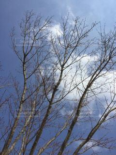 空の写真・画像素材[403936]