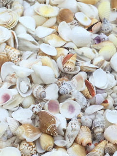 海の写真・画像素材[406159]