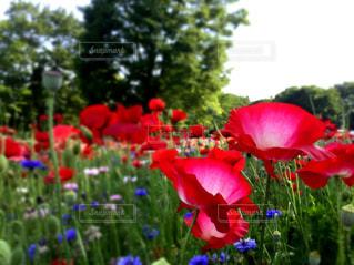 花の写真・画像素材[502335]