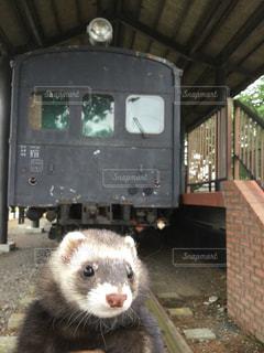 電車の写真・画像素材[511807]